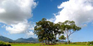 The sacred Kukaniloko Birthing Stones is also called Kukaniloko Birthstones State Monument.