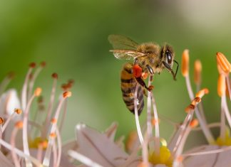 The Honey Bees real importance lies in its performance as a pollinator. The value of just the almonds produced in California each year.
