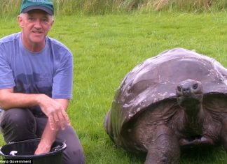 Meet the Jonathan the world's oldest living Tortoise is starting over with a clean sheet at 184 years old and enjoy his first ever bath.