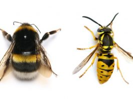 Bees and wasps are two of the insects most beneficial to human beings.