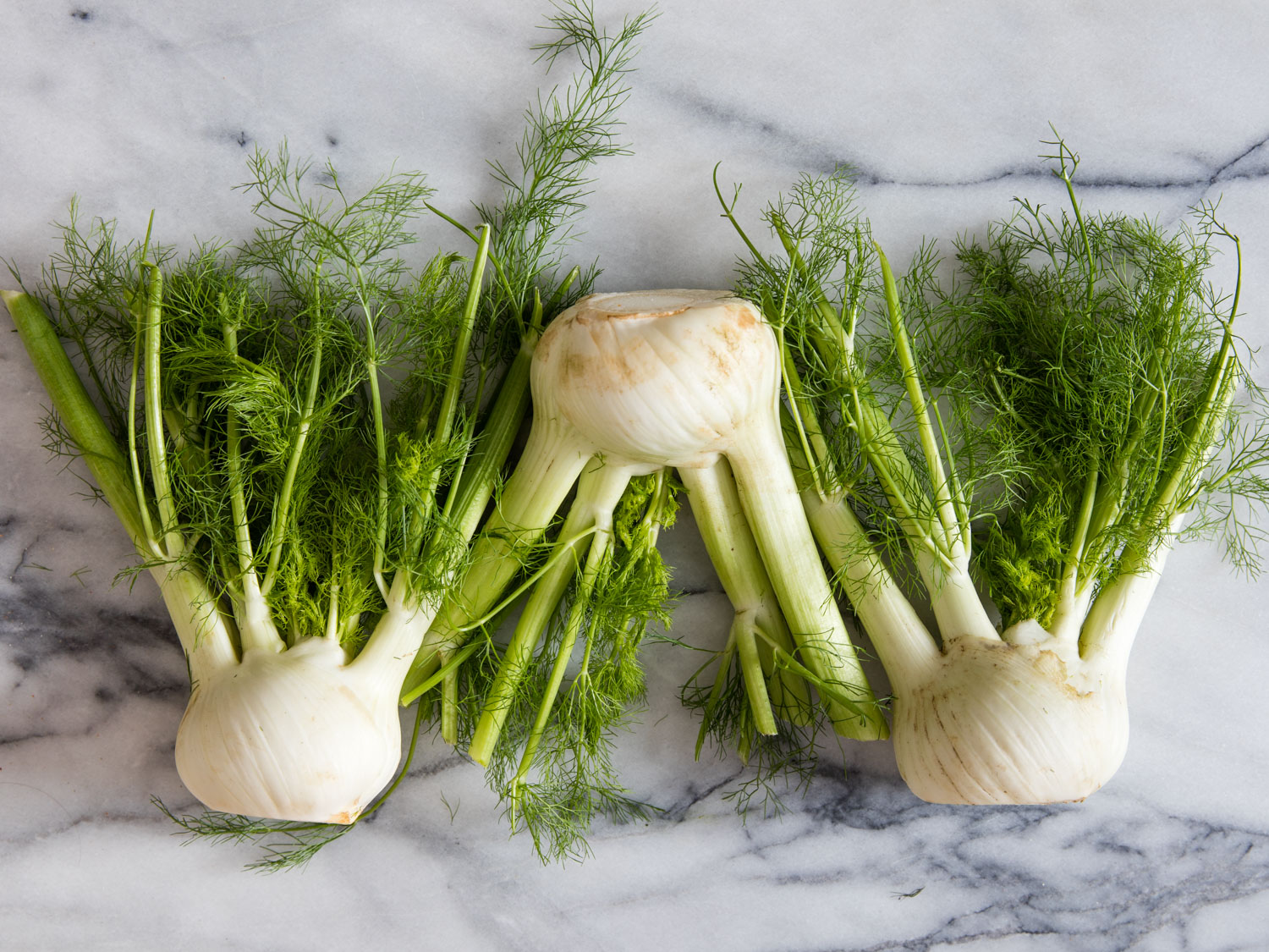 Fennel has history as old as the Mediterranean basin where it originated. The ancient Egyptians, Greeks & Romans all ate its aromatic fruits.
