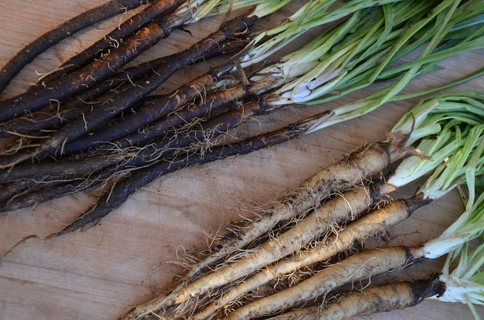The Parsnip seeds are slow sprouting, the plants are slow growing, and he whole crop can take a good year to produce if you do it right.