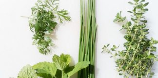 """Thyme (Thymum) was a symbol of life energy to the ancient Greeks, of spirit and bravery. """"Tosmell of thyme"""" was an expression of praise, and athletes anointed their chests with thyme oils before games to promote courage."""
