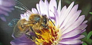Man has kept Honey Bees for thousands of years, but research is now revealing details of their complex lives - including extraordinary dances