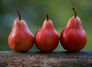 How to grow pears on sturdy, deep-rooted trees that can live and bear for as long as seventy-five years. They will take less cold than apples