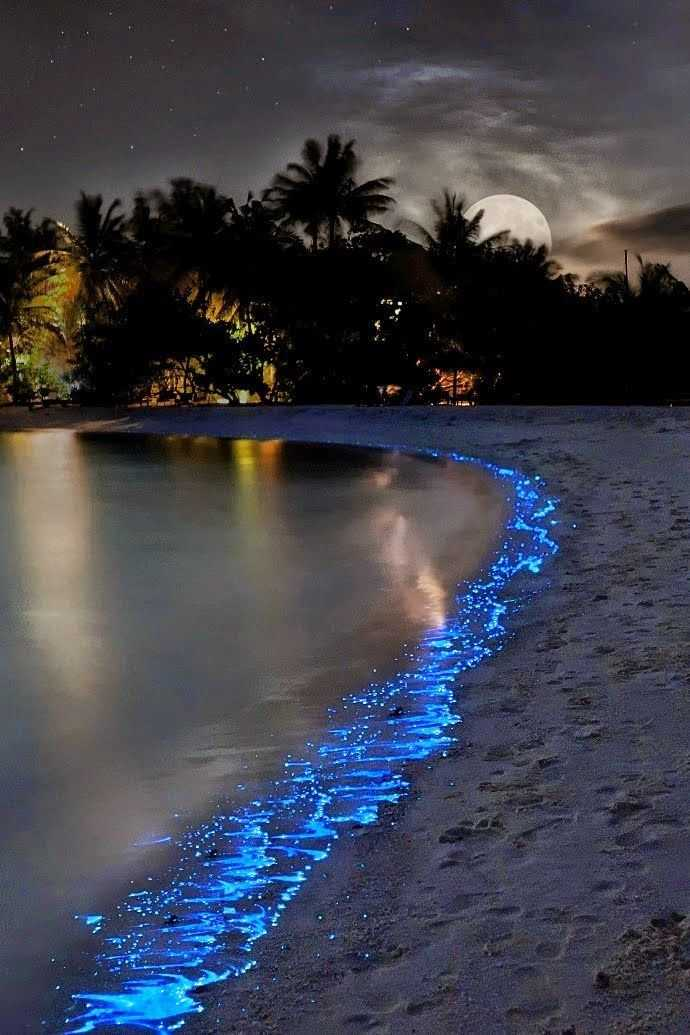 whenever you visit the Maldives, then a sea of stars be sure to venture to the shores for a midnight stroll and look upon the glowing sea that will not only be an embossed in your brain forever
