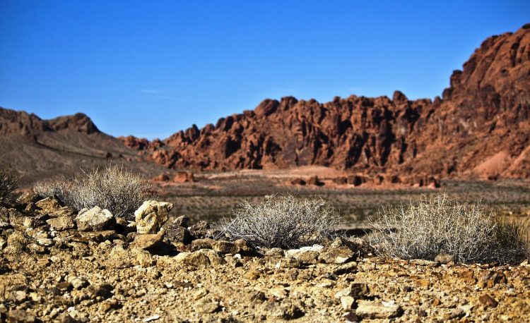 The valley of the fire has diverse flora and fauna varieties in a desert environment.