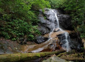 Log Hollow Falls is a 25ft waterfall in the Pisgah National Forest, Carolina. A steep cascade with several sections of free-falling water.