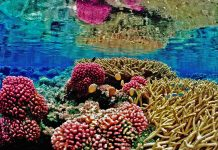 Reefs are very fragile environments that cannot tolerate a wide range of conditions.